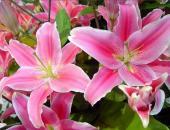 http://goctinmoi.com/thap-huong-hoa-ly-la-dai-ky-va-5-loai-hoa-nen-bay-len-ban-tho-206968.html