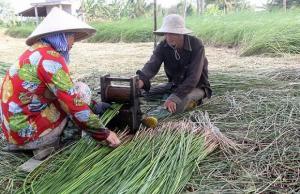 Bộ ảnh đồng cỏ Việt Nam 'lượn sóng' ngoạn mục đang gây bão cộng đồng mạng quốc tế
