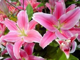 Thắp hương hoa ly là đại kỵ và 5 loại hoa nên bày lên bàn thờ