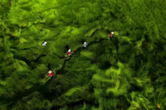 đồng cỏ Việt Nam, cỏ lác, phong cảnh, cộng đồng mạng